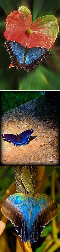 Zooming on the heart | Butterflies